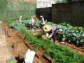 Idosos fazem horta e compostagem